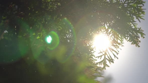 Thumbnail for Sun Ray In The Leaves Of The Trees 7