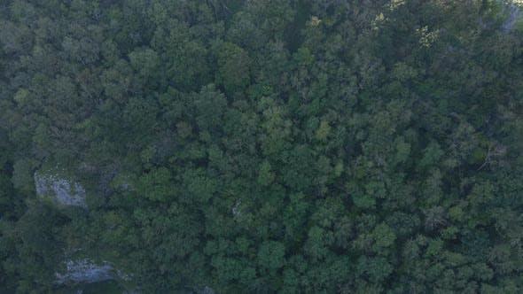 Thumbnail for Aerial Shot Flying Over Trees