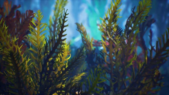 Thumbnail for Underwater Tropical Colourful Soft-hard Corals Seascape