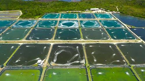 The Shrimp Farming in Philippines.