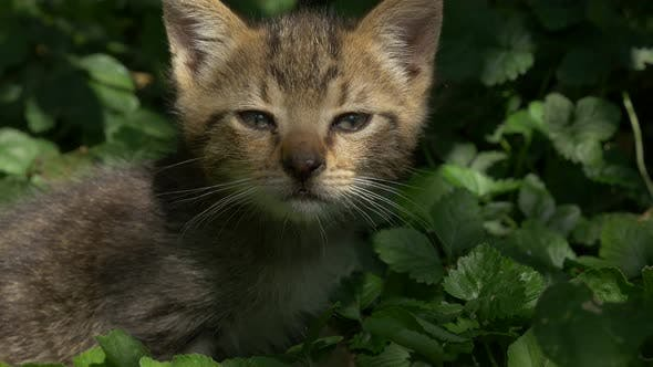 Thumbnail for Cute kitten in the grass playing with plants 3840X2160 4K  UHD footage - Little cat in the nature 4K