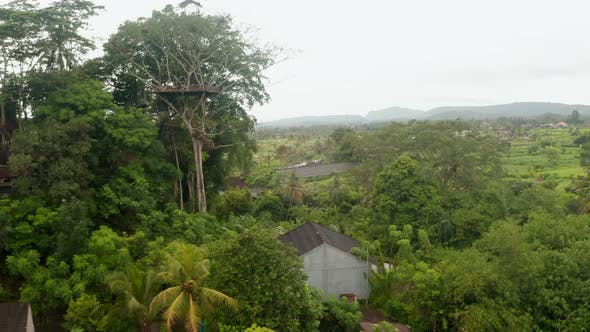 Aerial View of Watch Tower and Hanging Bridge in the Canopy of Tropical Tree