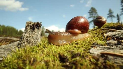 Snail Slowly Creeping