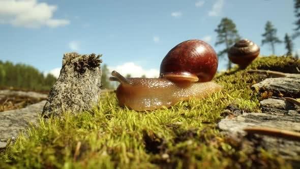 Thumbnail for Snail Slowly Creeping