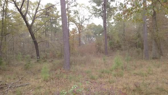 Thumbnail for Drone of Pineywood Pine Forest in East Texas
