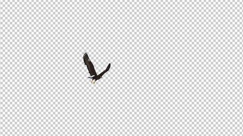 Black Hawk - Flying Around - Transparent Loop