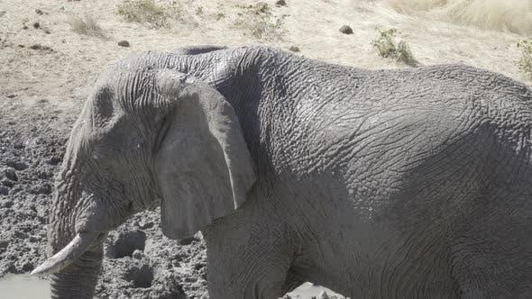 Bain de boue éléphant