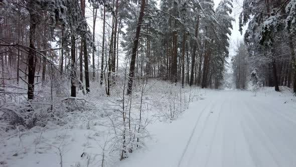 Through the winter forest by car