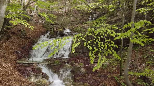 Thumbnail for Motion over Mountain Stream Flow in Sunny Spring Forest with Green Trees