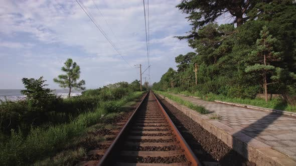 Cover Image for Railway Running Along the Beach on Seashore Through a Forest with Conifers and Tropical Trees
