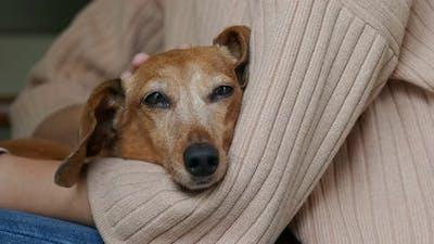 Woman pets dachshund at home