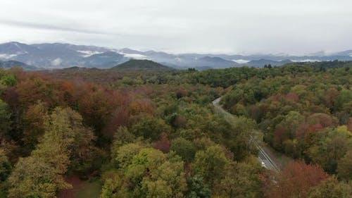 Beech Field in Autumn Treetop
