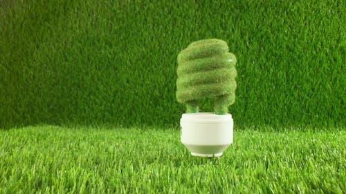 Eco Light Bulb in Green Grass