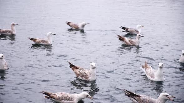 Thumbnail for Seagulls