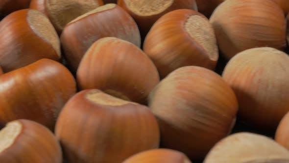 Thumbnail for Corylus avellana filberts  on wooden surface slow dolly sliding 4K 2160p UHD footage - Hazelnut  she