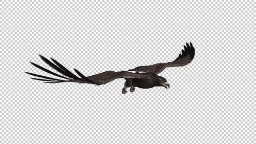 Steppe Eagle - Flying Attack Loop - Side Angle