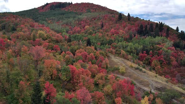 Thumbnail for Aerial view flying over trees on hillside showing colorful trees