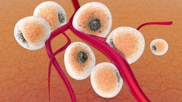 Animation of Fat Cells connecting to Blood vessels
