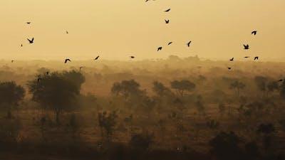 Birds at Sunrise on the Background of Beautiful Nature of India