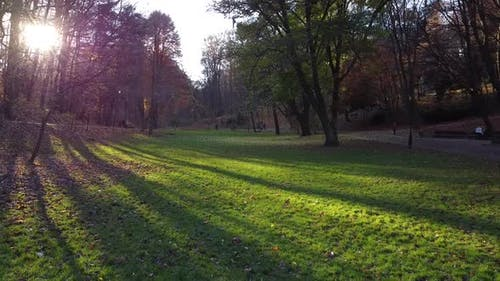 Green lawn in the autumn park.