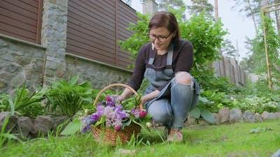 Woman Gardener Florist in Garden with Basket of Fresh Plucked Garden Spring Flowers