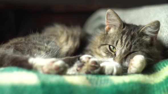Thumbnail for Sleeping Cat