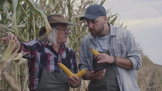 Thumbnail for Farmers Comparing Corn with Internet Data