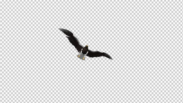 Thumbnail for Sea Eagle - 4K Flying Transition - I