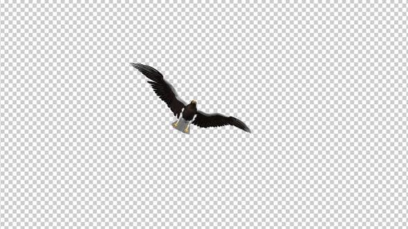 Sea Eagle - 4K Flying Transition - I