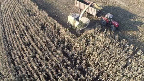 Aerial shot of wheat harvesting in the field