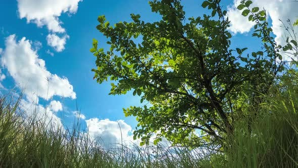 Thumbnail for Bottom View on Moving Clouds in Blue Sky Above Landscape Fields with Trees, Timelapse