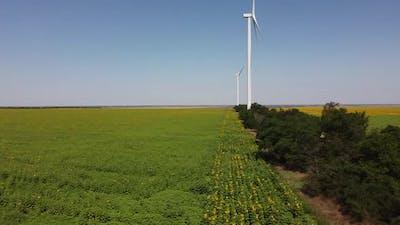 Sunflower field. Windmill. Wind farm.