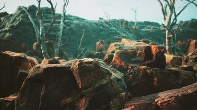 Lava Stone Field with Dead Trees and Plants