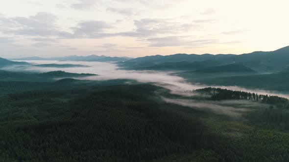 Thumbnail for Fog Over Coniferous Forest in the Carpathians
