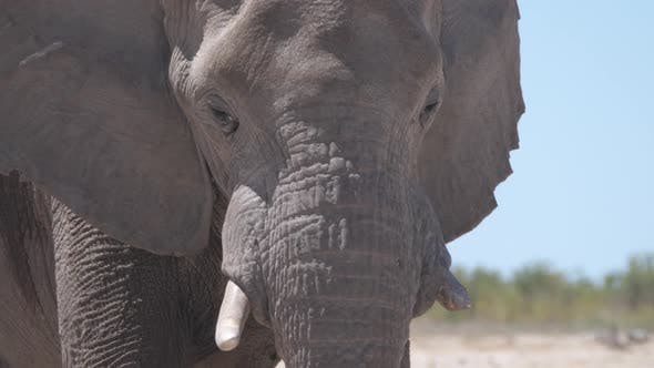 Cover Image for Close up from an elephant