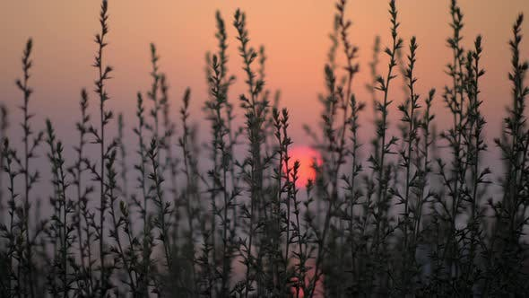 Thumbnail for Red Sunset, View Through the Grass