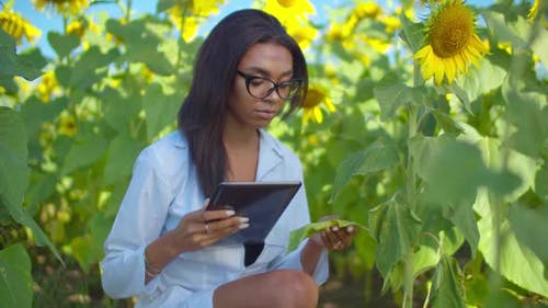 Agronomist Examining Damaged Plant After Insecticide