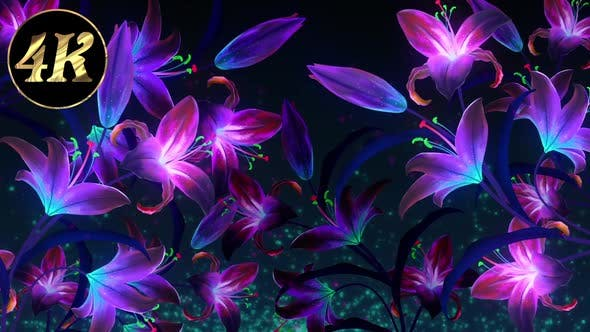 Cover Image for Beautiful Glowing Orchid