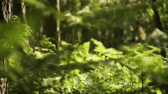 Thumbnail for Forest floor at sunrise