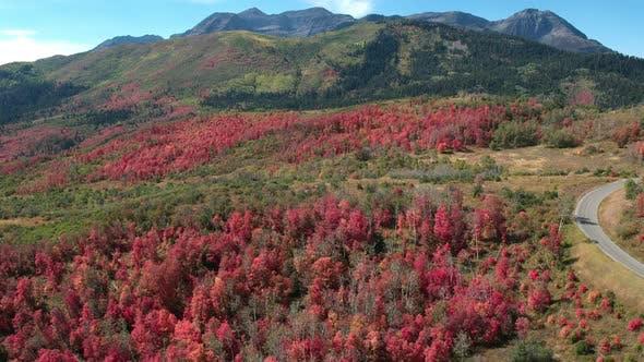 Thumbnail for Luftaufnahme von Herbstfarbe über Wald