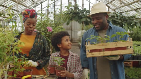 Afro-American Family Working in Greenhouse