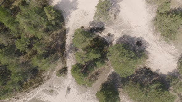 Thumbnail for Coastal Forest Dunes On Baltic Sea Coast Curonian Spit. Nordic Dry Climate Zone.