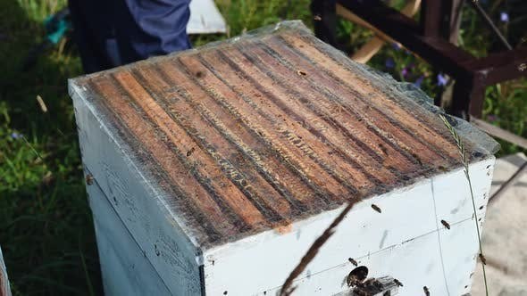 Thumbnail for Preparation of a Bee Hive for Honey Extraction