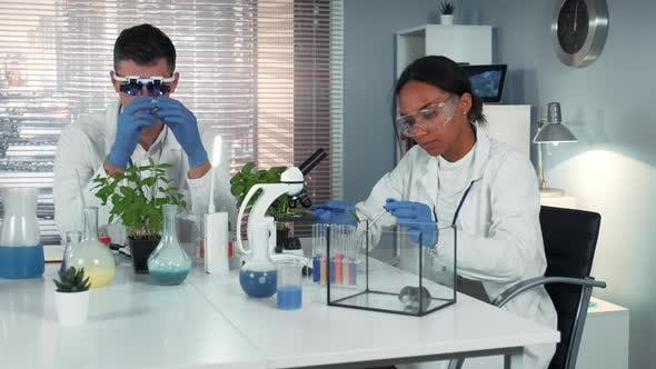 Thumbnail for Black Female Scientist Dropping Fertilizer on Leaf and Giving To the Hamster in Chemistry Lab