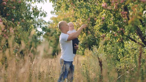 Father Holds a Son in His Arms and Shows Apples on a Branch of an Apple Tree