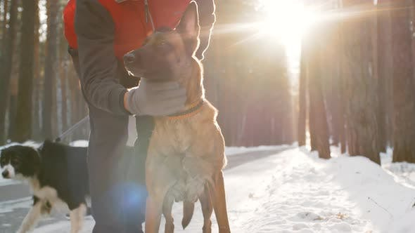 Thumbnail for Dog Owners Enjoying Time in Forest