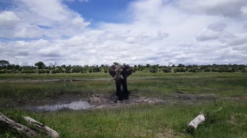 Elephant at a waterpool