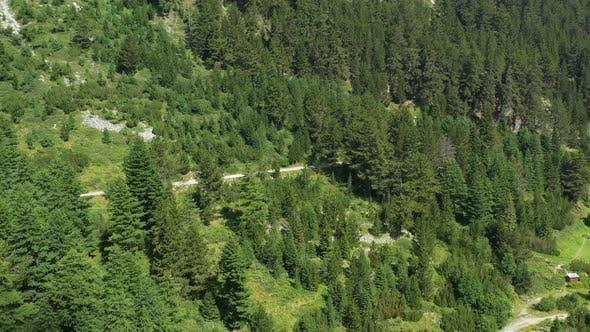 Thumbnail for Flight Over Pine Forest