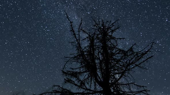 Thumbnail for Milky Way Galaxy over Tree Silhouette in Dark Night
