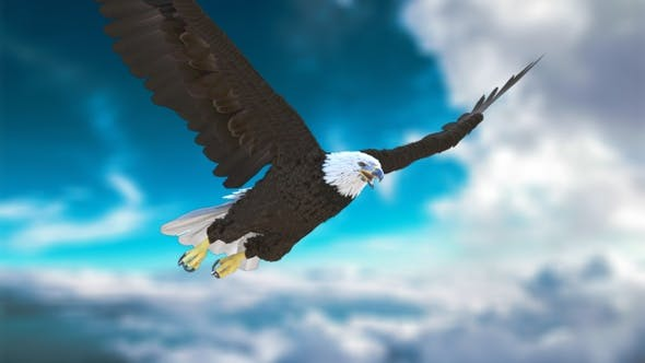 Bald Eagle flying from 4 different angles - 2K